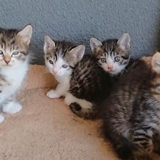 仔猫4匹里親募集