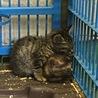 時間がありません!2ヶ月くらいの仔猫です。 サムネイル3
