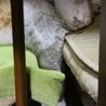 寝落ち (=^・^=)