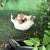 【保護】美人さんと子猫4匹