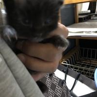 青い瞳の黒猫さん