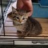 保健所収容 生後1ヶ月ぐらいの子猫