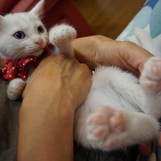 かわいすぎ4兄妹、白猫マリンちゃん、医療済
