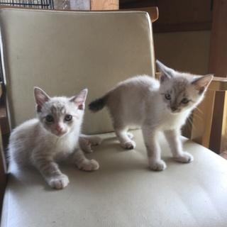 山口県の保健所より殺処分を免れて来た仔猫達です。