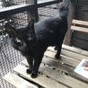黒猫☆ヴィトンちゃん サムネイル2