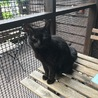 黒猫☆ヴィトンちゃん サムネイル3
