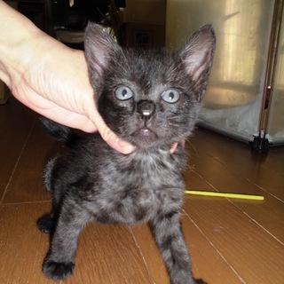 動画あり 人懐こい黒猫あかまつくん