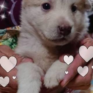 野犬から生まれた子犬です宜しくお願いします。まるこ