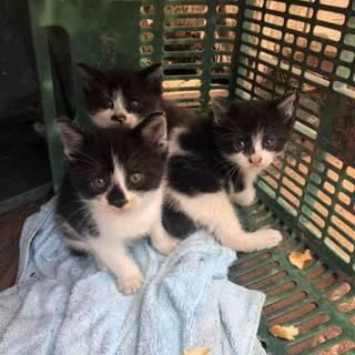 白黒3姉妹♀離乳食もぐもぐ