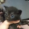 マイペースな黒猫ちゃん