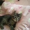 迷い子の子猫保護