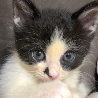 可愛い子猫です☆白黒のいよかんちゃん