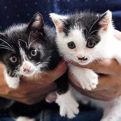 子猫だらけの譲渡会 大人猫もいるニャ♪