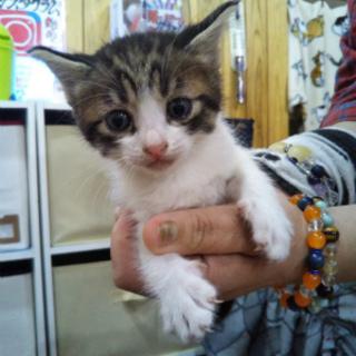 つぶらな瞳が愛らしい子猫