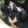 4匹の子猫 里親さん探してます。