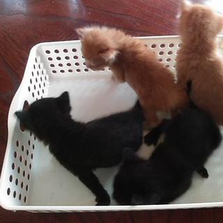 4匹の子猫の里親さん募集してます‼