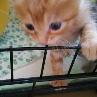 元気で可愛い子猫