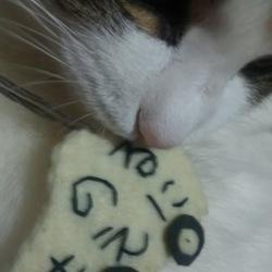 猫 バンバン