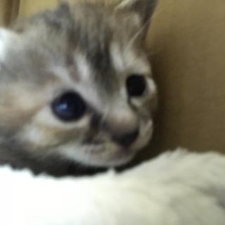 生後1ヶ月の元気で甘えたな子猫ちゃん