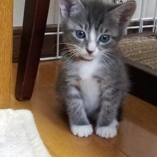 生後6週から2か月の子猫9匹、2匹一緒に
