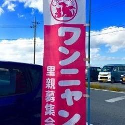 沖縄動物愛護団体 NPO法人動物たちを守る会ケルビム