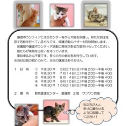 名古屋市動物愛護センター 猫の譲渡会