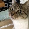 お年寄りの多頭崩壊現場からの保護猫です。