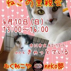 ふくねこや。。neko部 第30回 保護猫さとおや会