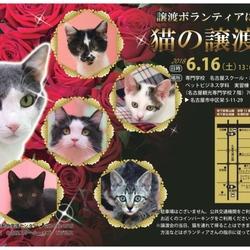 名古屋市動物愛護センター 猫の譲渡会 サムネイル1
