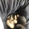 人なつっこい子猫の里親募集中です。