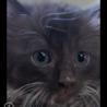 長毛のぬいぐるみのように愛らしい赤ちゃん猫!