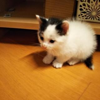 急募、カラスに虐待されていた子猫