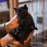 離乳期1ヶ月弱・黒猫3匹兄弟 サムネイル3