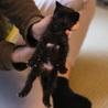 離乳期1ヶ月弱・黒猫3匹兄弟 サムネイル7