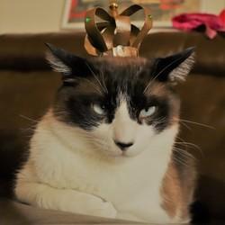 我が家の王様☆