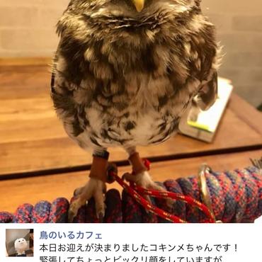 鳥のいるカフェさんからお迎えした際の記事です。