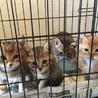 4月24日生まれ 子猫4匹 さいたま市中央区