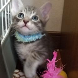 みんにゃの家 保護猫の譲渡会