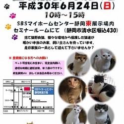 静岡市清水区にて猫譲渡会開催です