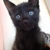 なれなれ黒猫☆木蔭(こかげ)ちゃん 1ヵ月半