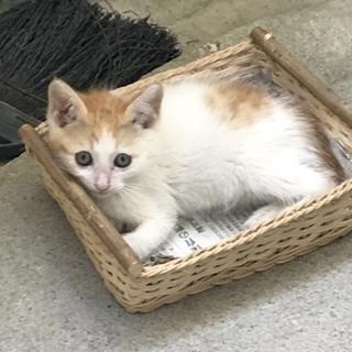 人懐っこい甘えん坊な子猫