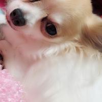 くーちゃん(来未)