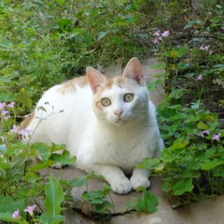 のんびり茶白猫☆
