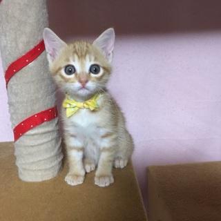 美しい姉妹猫・茉旺ちゃん