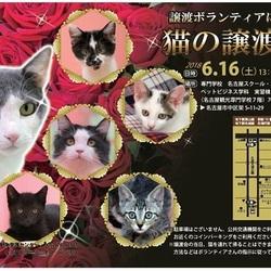 名古屋市動物愛護センター譲渡ボランティアによる猫の譲渡会