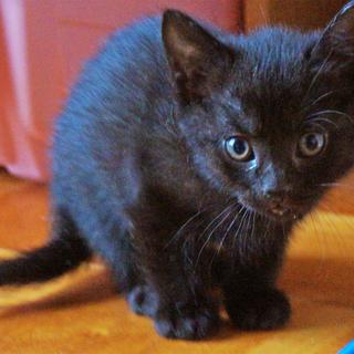 【再募集】4月4日生まれの子猫ちゃん♪