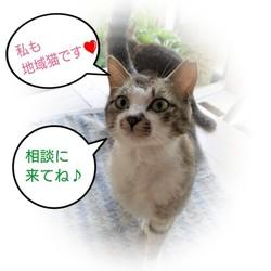 福岡県古賀市の『飼い主のいない猫』に関する相談会
