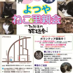 6月9日(土) 地域猫から社会猫へ FIPフリー 四谷猫廼舎 里親会(ボランティア募集中)