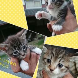 不妊手術は絶対です!12匹の子猫を保護
