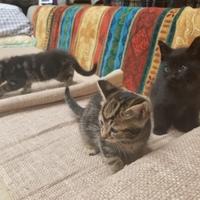 子猫ちゃん逹